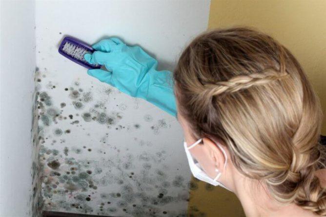 Борьба с грибком на откосах