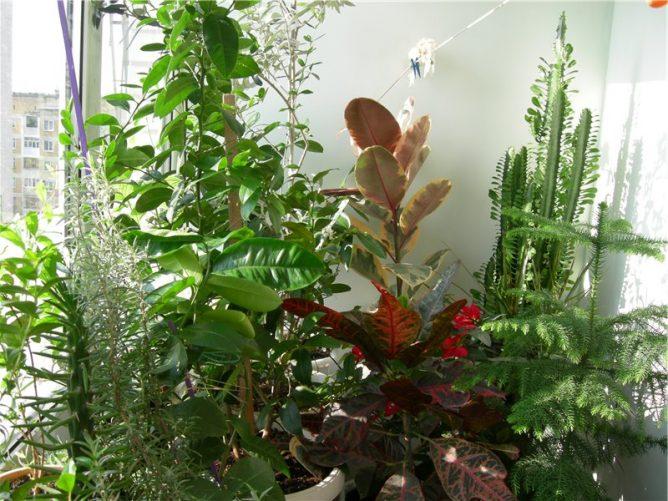 Цветы для балконного зимнего сада