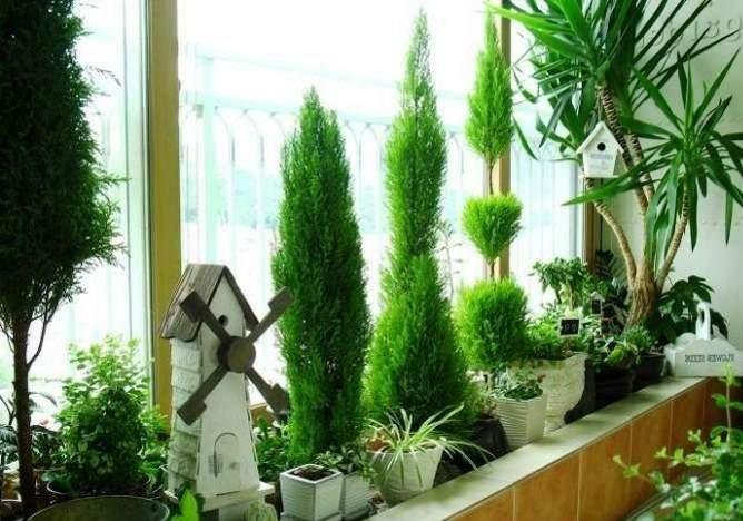 Морозостойкие растения